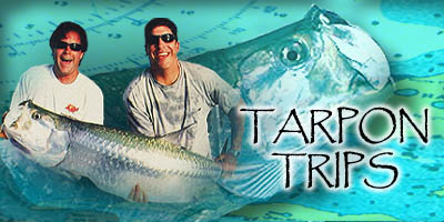 Tarpon Fishing Info and Photos